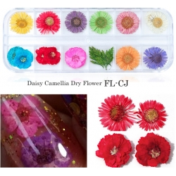 сухи цветя за декорация на маникюр - FL-CJ